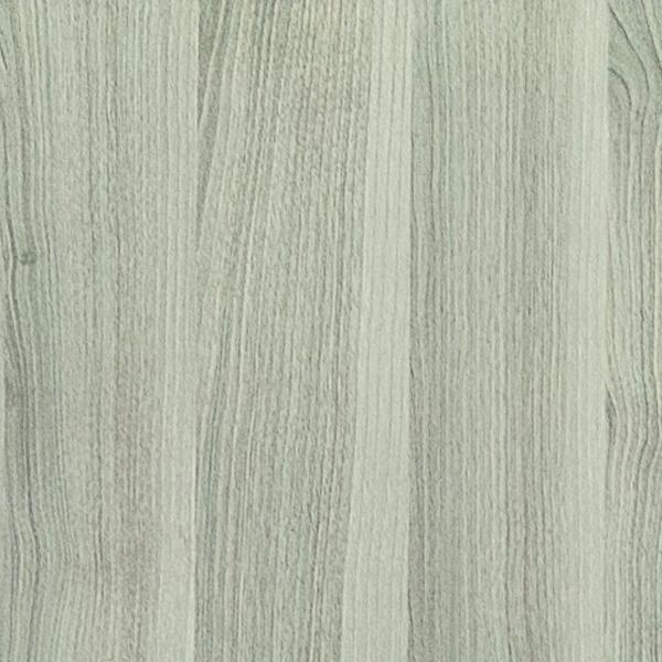 Acacia Argintiu